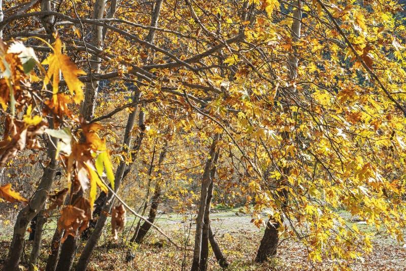 Schönes Morgenlicht in der Wiese, bunter Herbstlaub stockfotos