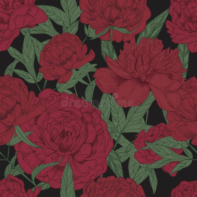 Schönes nahtloses mit Blumenmuster mit weinartigen Pfingstrosen und Grün verlässt auf dunklem Hintergrund Blühende Blumenhand gez lizenzfreie abbildung
