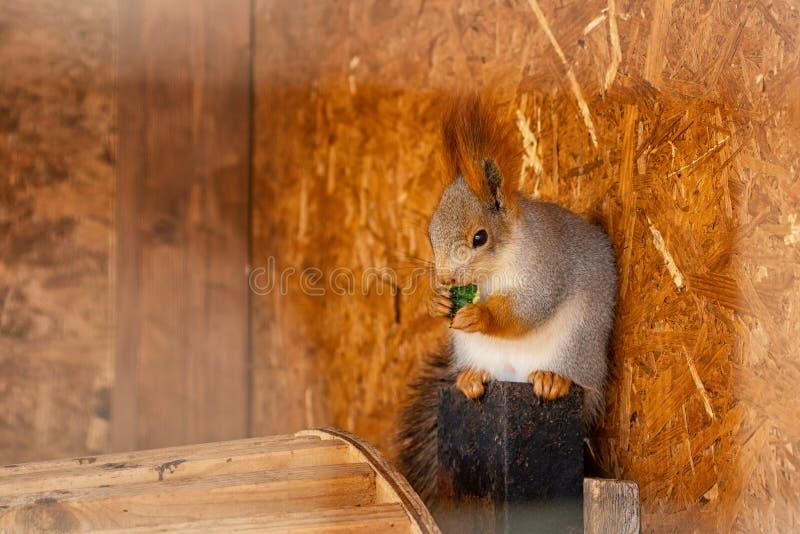 Schönes nettes flaumiges Eichhörnchen an einem sonnigen Tag lizenzfreie stockfotografie