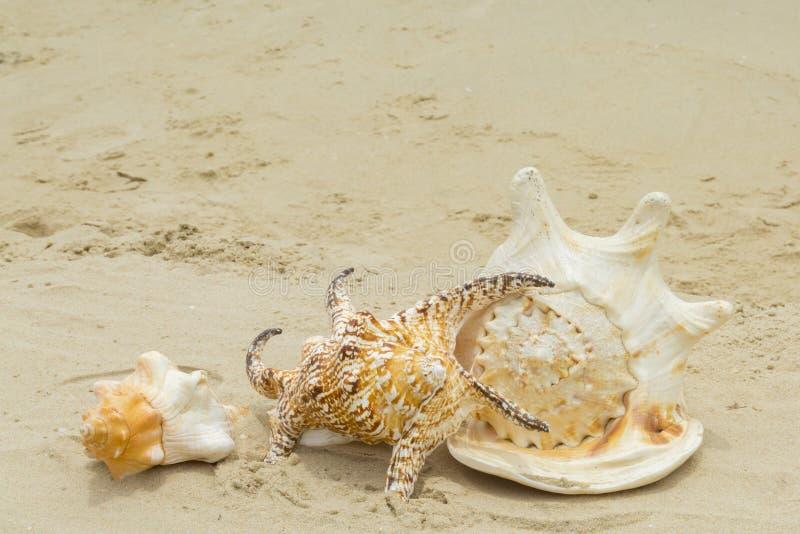 Schönes Oberteil und Strand lizenzfreie stockfotos