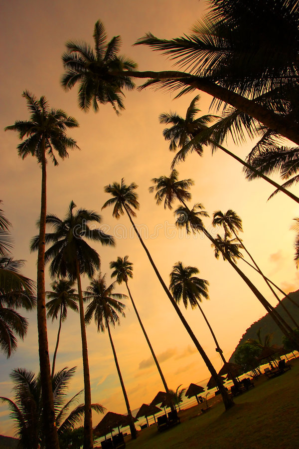 Download Schönes Panorama An Einem Tropischen Strand Stockbild - Bild von ozean, schön: 9097991