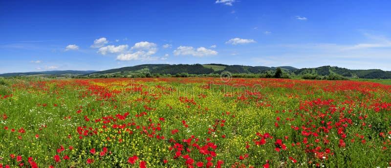 Schönes Panorama mit Mohnblumefeld lizenzfreies stockfoto