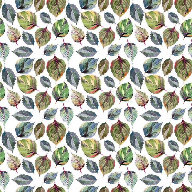 Schönes reizendes nettes wunderbares grafisches helles Blumen- Kräuter-aut vektor abbildung