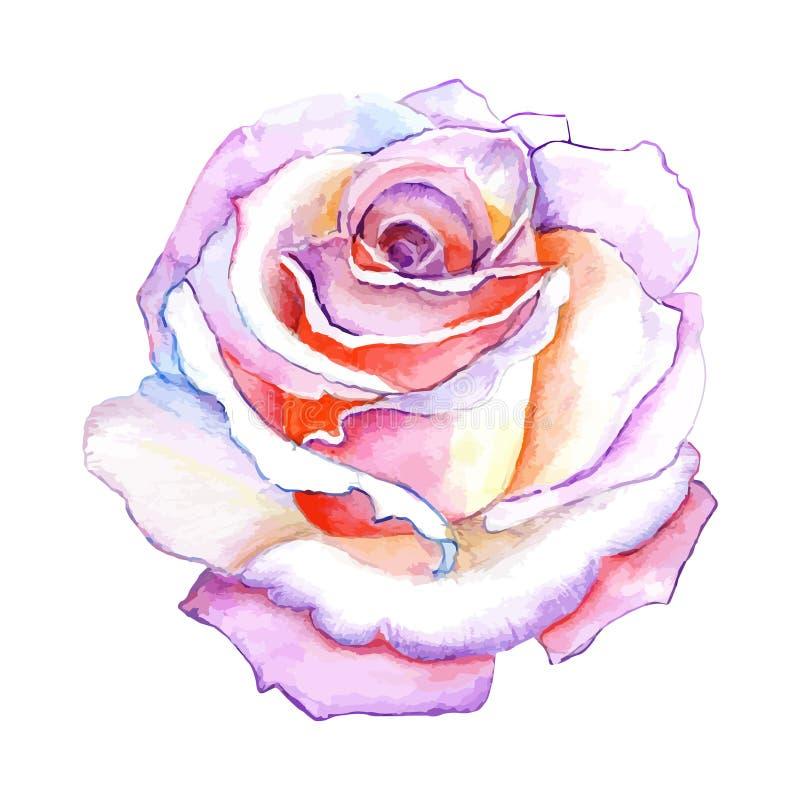 Schönes rosafarbenes Aquarellhandgemaltes lokalisiert auf weißem Hintergrund vektor abbildung