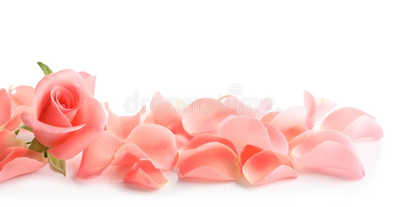 Schönes Rosafarbenes und Blumenblätter stockbilder