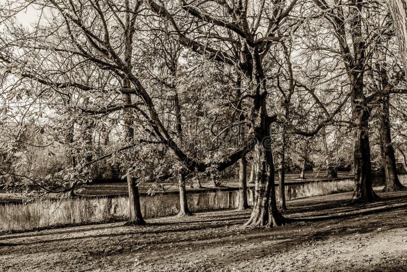 Schönes Schwarzweiss-Bild von Bäumen und von Fluss lizenzfreies stockfoto