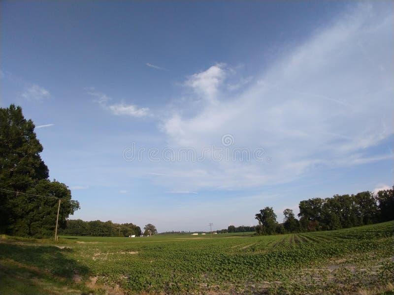 Schönes Sommerfeld in Virginia stockbild