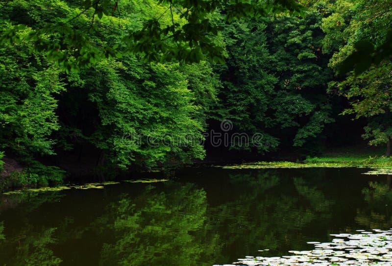 Schönes Sommerholz stockfoto