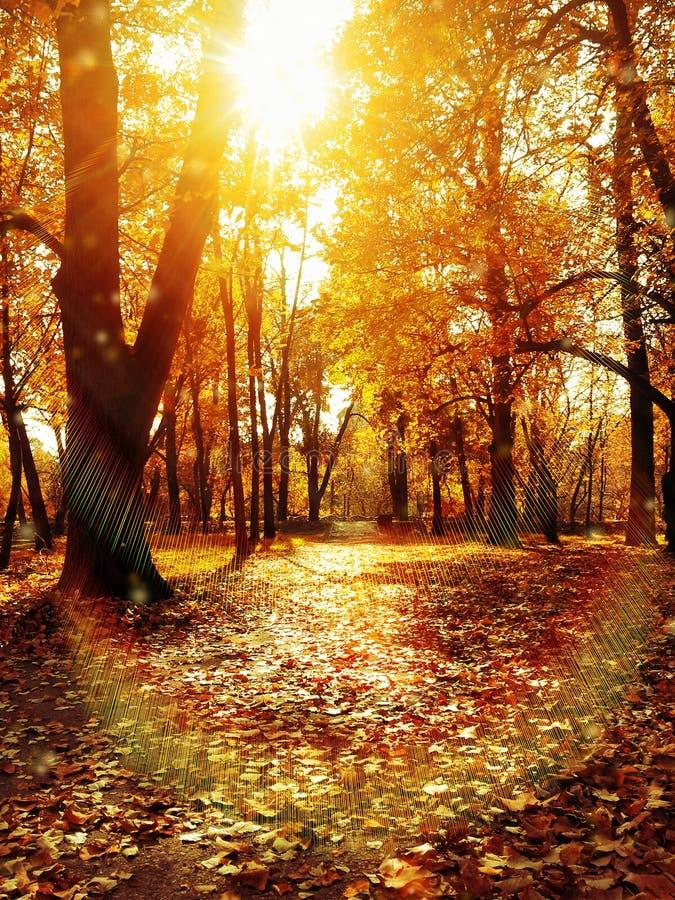 Schönes Sonnenaufflackern des orange Herbstes lizenzfreies stockbild