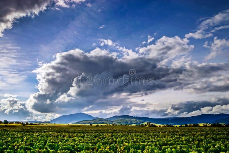 Schönes Sonnenlicht über Weinbergen mit blauem Himmel und Bergen an stockfoto