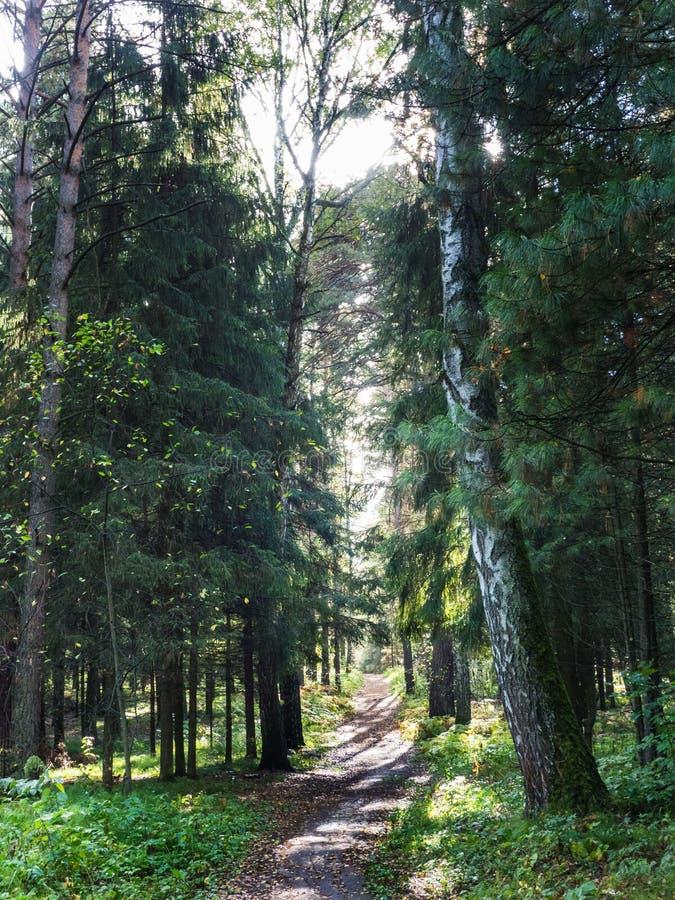 Schönes Sonnenlicht im Wald lizenzfreie stockbilder