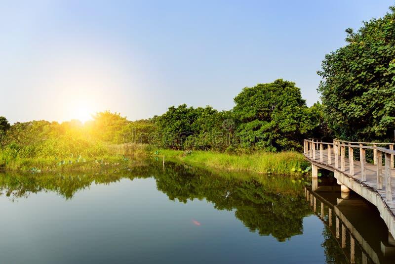 Schönes Sonnenlicht mit See stockbild