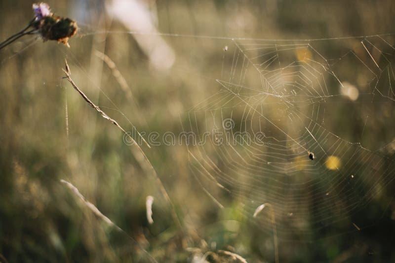 Schönes Spinnennetz auf Wildflowers in der sonnigen Wiese bei Sonnenuntergang in den Bergen Erforschungsblumen und Kräuter, ländl lizenzfreie stockfotos