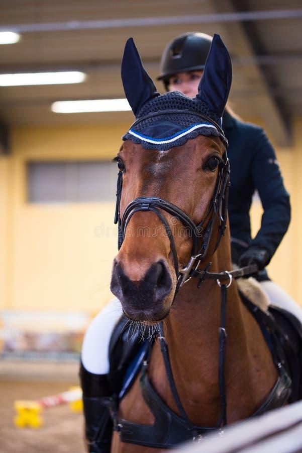 Schönes springendes Pferd mit Ohrmuffen lizenzfreie stockfotos