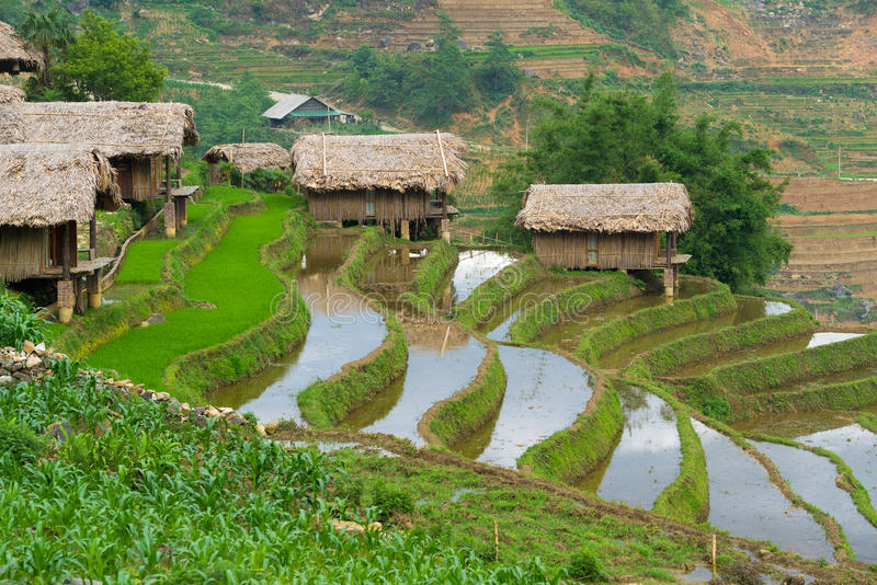 Schönes terassenförmig angelegtes Reisfeld in Lao Cai Provinz in Vietnam stockfotos
