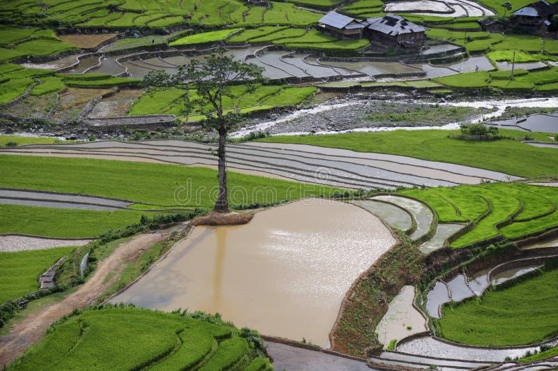 Schönes terassenförmig angelegtes Reisfeld in MU Cang Chai, Vietnam stockfotos