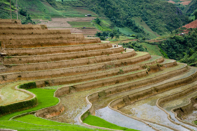 Schönes terassenförmig angelegtes Reisfeld in MU Cang Chai, Vietnam lizenzfreie stockbilder