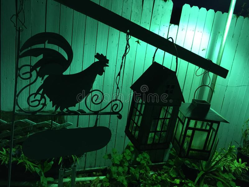 Schönes Tier des Hahns stockfotografie