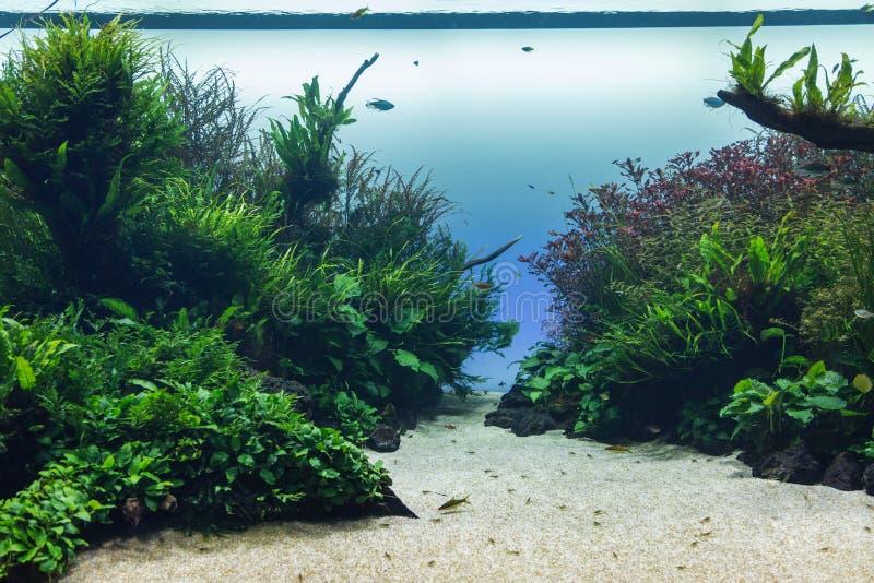 Schönes tropisches Frischwasseraquarium mit Grünpflanzen und Fischen stockbild