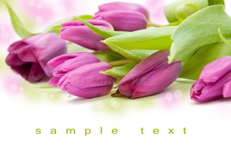 Schönes Tulpe bouqet lizenzfreies stockbild