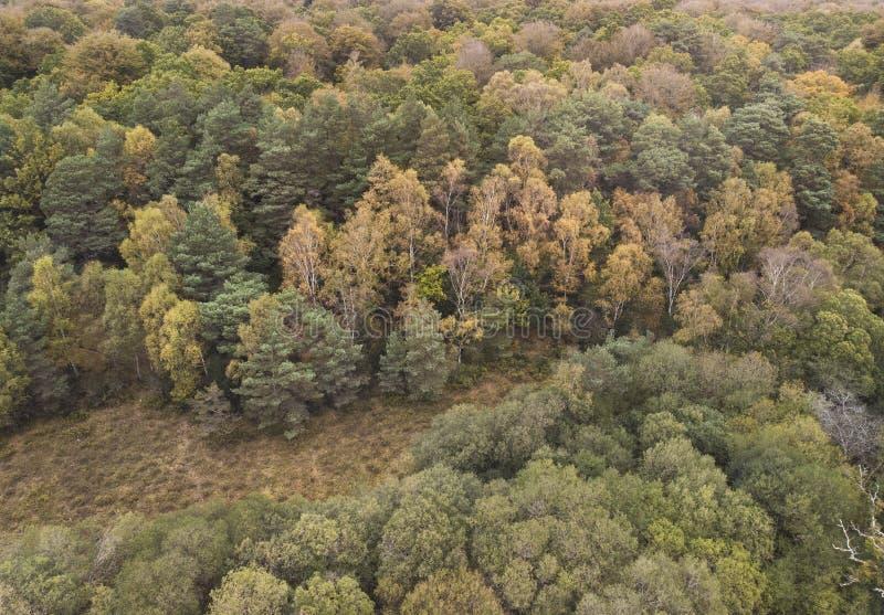 Schönes Vogelschaubrummen-Landschaftsbild während Autumn Falls des vibrierenden Waldwaldlandes stockfoto