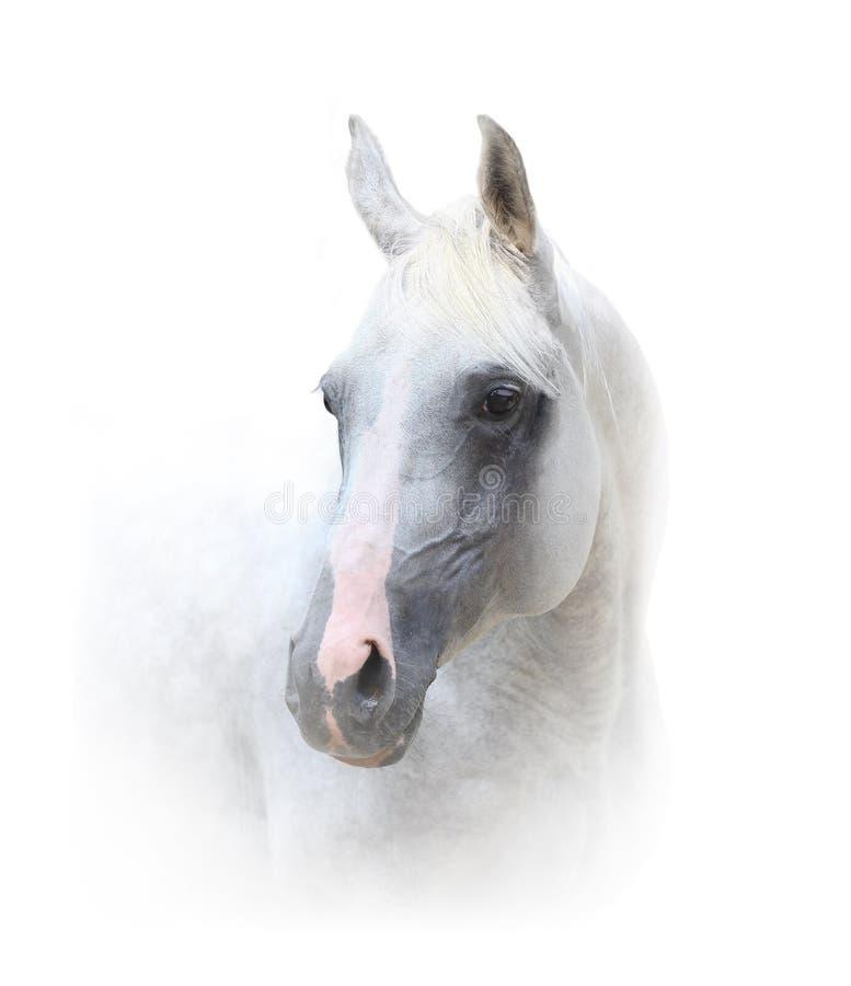 Schönes weißes Pferd lizenzfreies stockbild