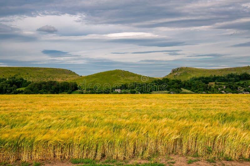 Schönes Weizenfeld im windigen Wetter Feld gegen den Himmel Ukrainische Landschaft ukraine lizenzfreie stockfotos