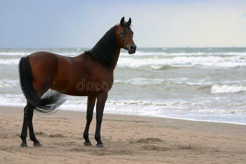 Schönheit auf dem Strand lizenzfreie stockbilder