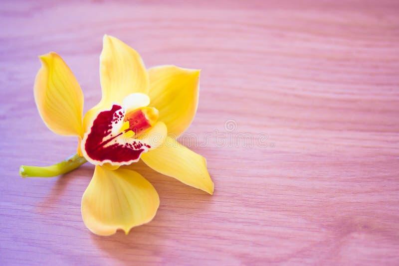Schönheit/Badekurort spornten Schuß der Orchidee auf Holz an lizenzfreies stockbild