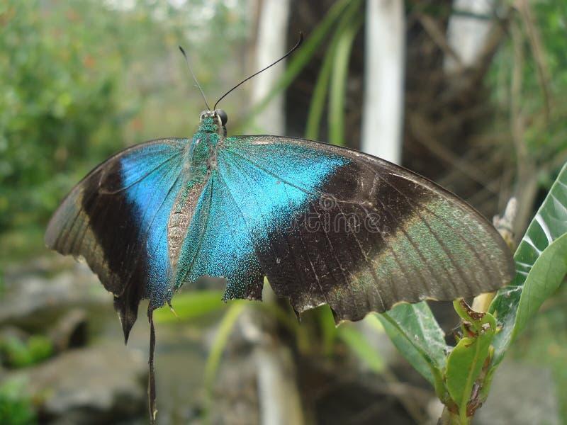 Schönheit der heftigen Flügel stockfotos