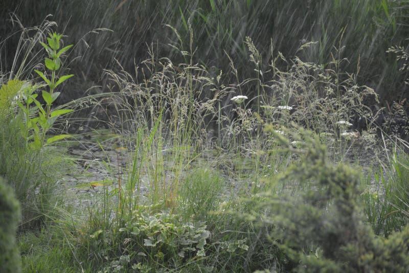 Schönheit der Natur stockfotos