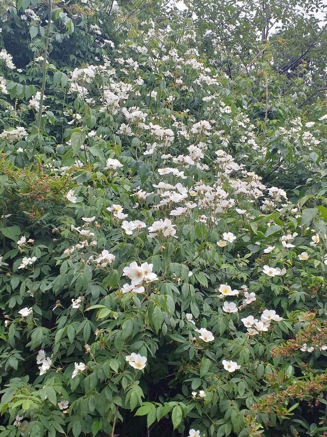 Schönheit der Natur, ja seine Blume vom Wald stockbild