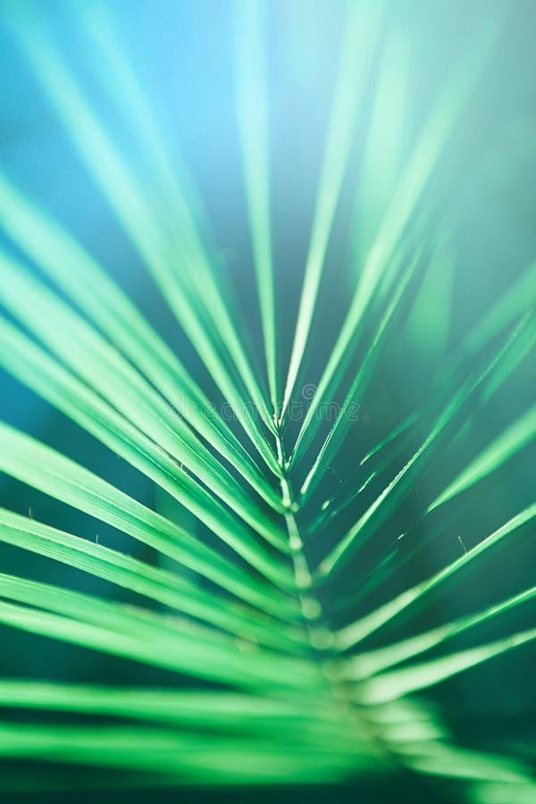 Schönheit der Tropen stock abbildung