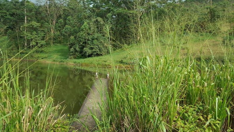 Schönheit des hohen Landes in Sri Lanka stockbilder