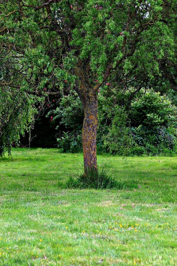 Schönheit drei des Naturgrüns stockbilder