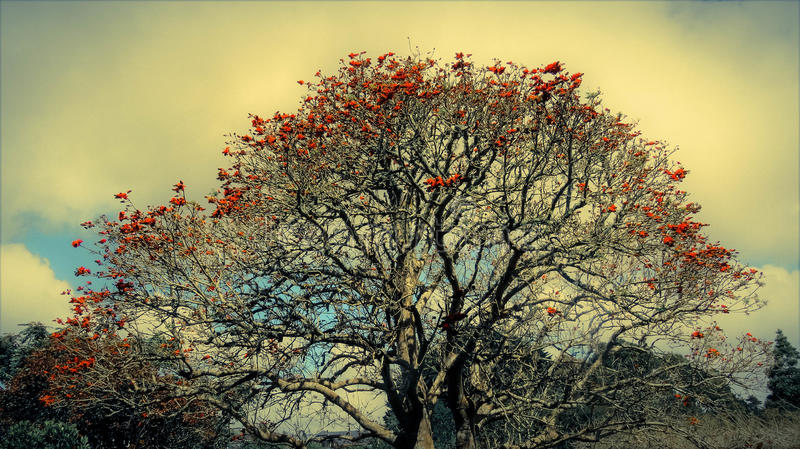 Schönheit im Himmelbaum lizenzfreie stockfotografie