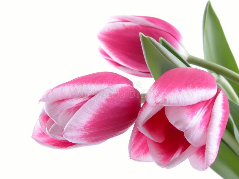 Schönheit im Rosa stockfoto