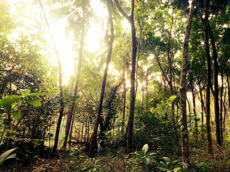 Schönheit und die Natur lizenzfreie stockfotos