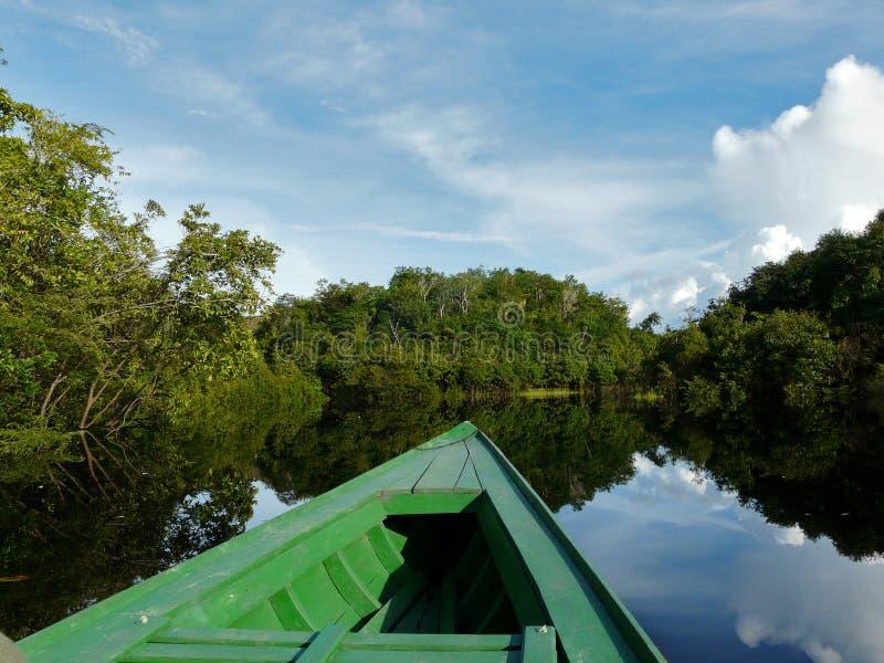 Schönheit von Amazonas lizenzfreie stockfotografie