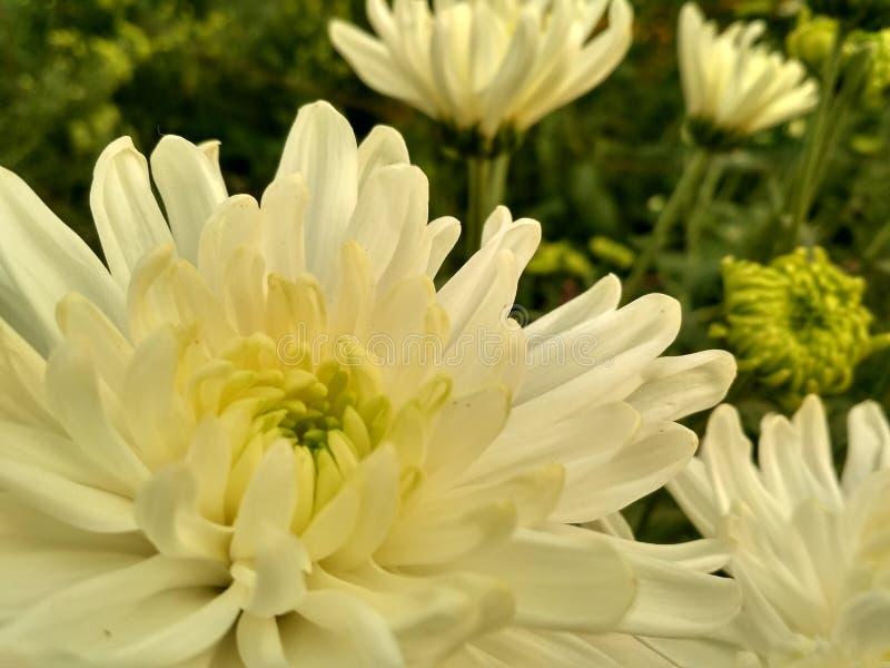 Schönheit von Blumen stockbild