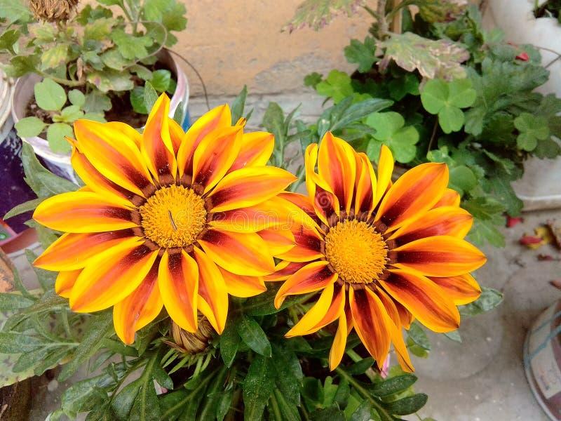 Schönheit von Blumen stockbilder