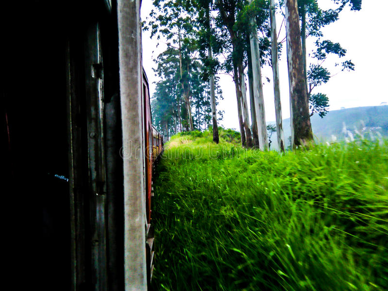 Schönheit von Sri Lanka stockbild