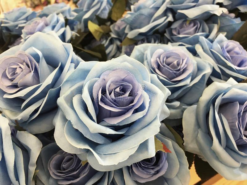 Schönheits-Blaurose durch Gewebe lizenzfreie stockfotos