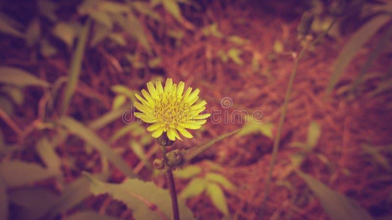 Schönheits-gelbe Blume in der Weinlese-Art stockbilder