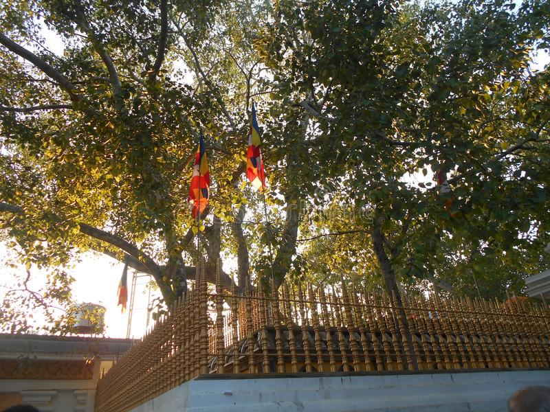 Schönheits-Natur-Erbe Buddha Anuradhapura Jaya Sri Maha Bodhiya stockfotografie