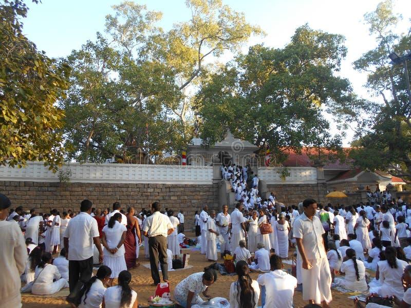 Schönheits-Natur-Erbe Buddha Anuradhapura Jaya Sri Maha Bodhiya stockfoto