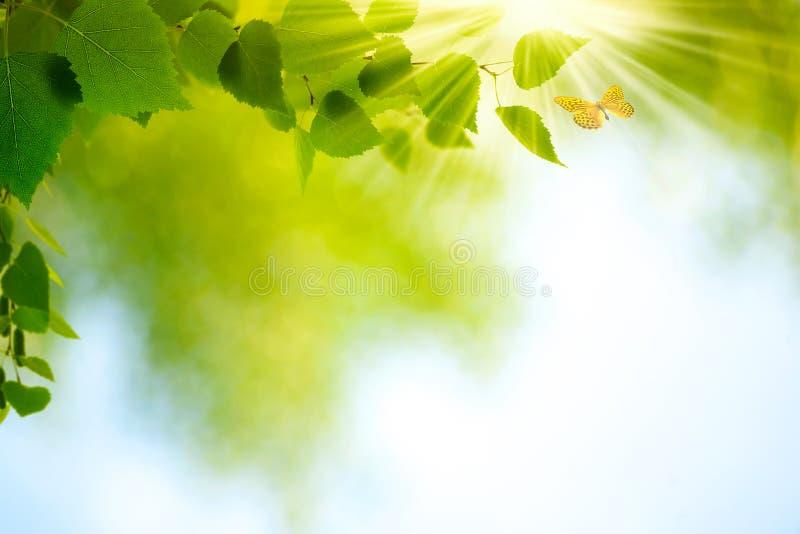 Schönheits-Sommer-Tag lizenzfreies stockbild