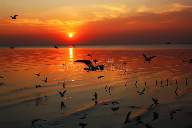 Schönheits-Sonnenaufgänge stockfotografie