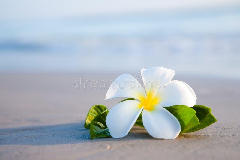 Schönheitsblumen auf dem Strand lizenzfreie stockbilder