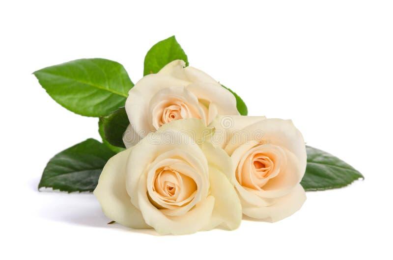 Schönheitsblumenstrauß von den weißen Rosen lizenzfreies stockbild